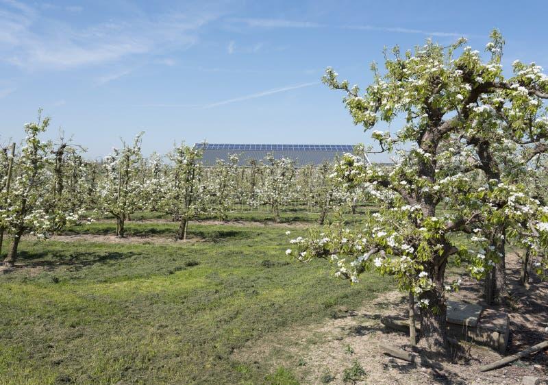 Apple-bloesem in boomgaard met zonnepanelen op schuur op de achtergrond royalty-vrije stock afbeeldingen