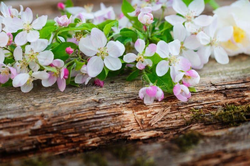 Apple-bloesem op houten raad royalty-vrije stock afbeelding