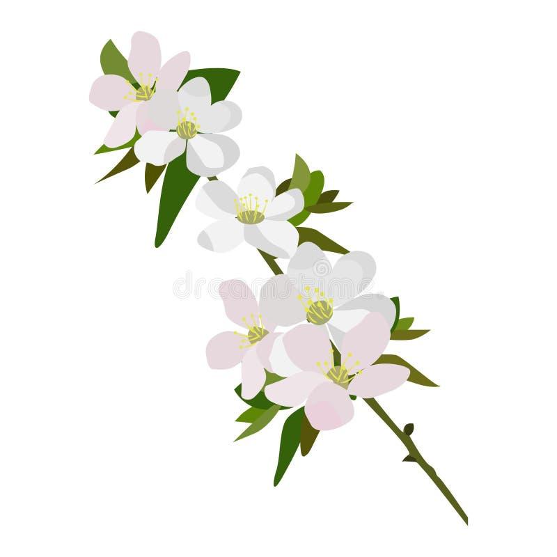 Apple-bloesem vectorpictogram op een witte achtergrond Bloemen op een takillustratie die op wit wordt geïsoleerd Bloemen realisti stock illustratie