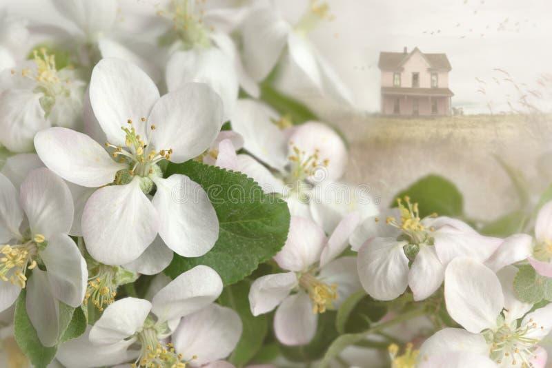 Apple-bloesems met huis op achtergrond stock foto