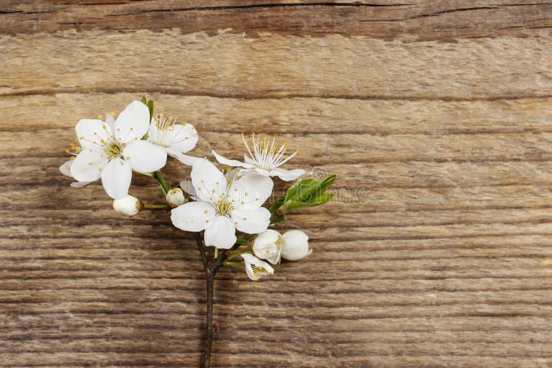 Apple blomning på träbakgrund arkivfoto