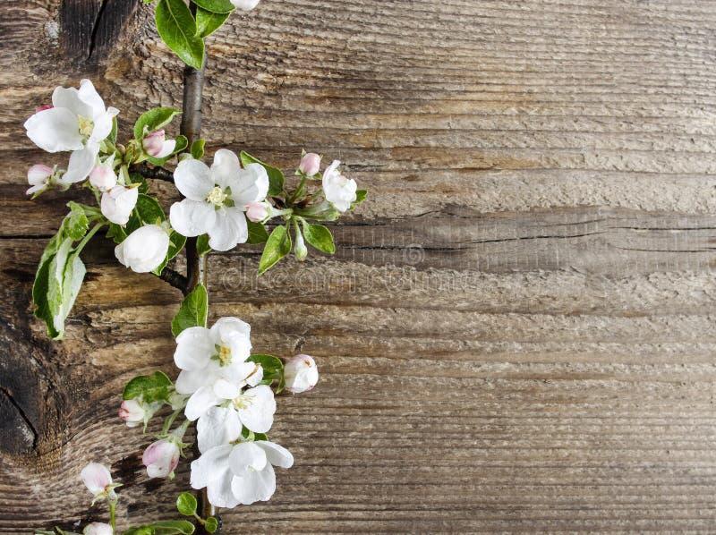 Apple blomning på träbakgrund royaltyfri fotografi