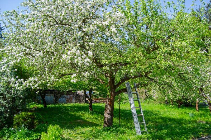 Apple blomningTree fotografering för bildbyråer