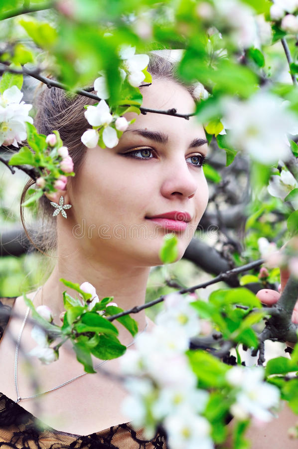 In the apple blossom stock photos