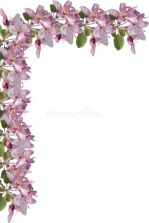 Apple Blossom Border royalty free stock photography