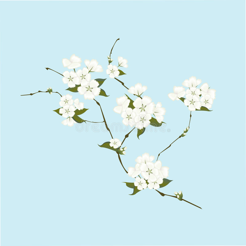 Apple blossom branch stock images