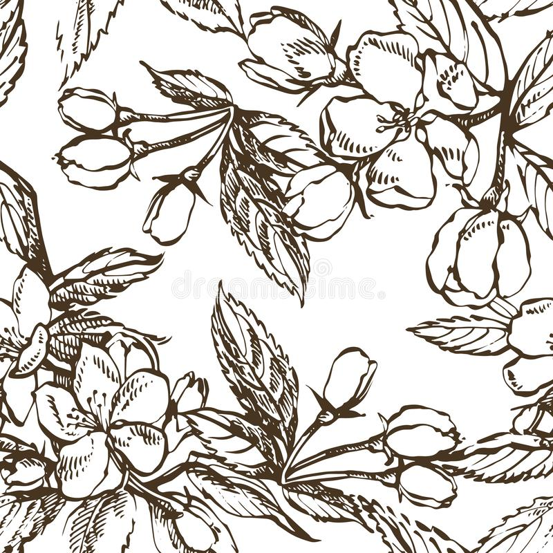 Apple blossom branch isolated on white. Vintage botanical hand drawn illustration. Spring flowers of apple tree. Seamless patterns stock illustration