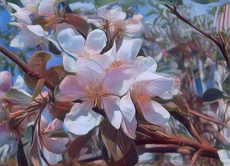 Apple blossom. Delicate pink and white flowers of a fruit tree. Thin flowering branch. Orchard in the spring. the awakening of stock images
