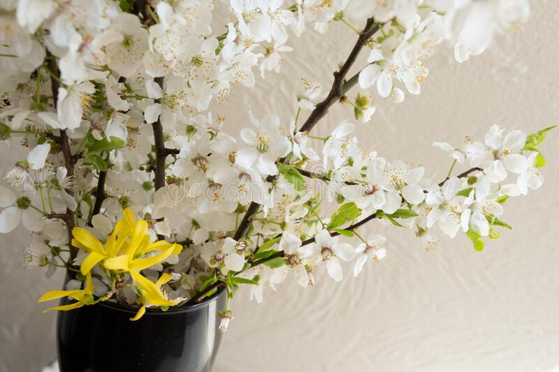 Apple blossom flower spring blooming tree white home. Blooming branches of apple tree at home. White flowers blossoms in spring stock photo
