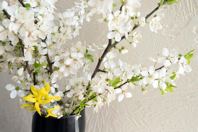 Apple blossom flower spring blooming tree white home. Blooming branches of apple tree at home. White flowers blossoms in spring royalty free stock image