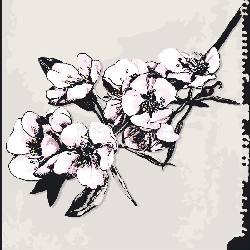 Free Apple Blossom On Grunge Background Stock Image - 6849571
