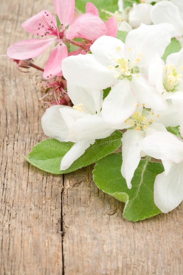 Download Apple blossom on wood stock image. Image of clipping - 25602843