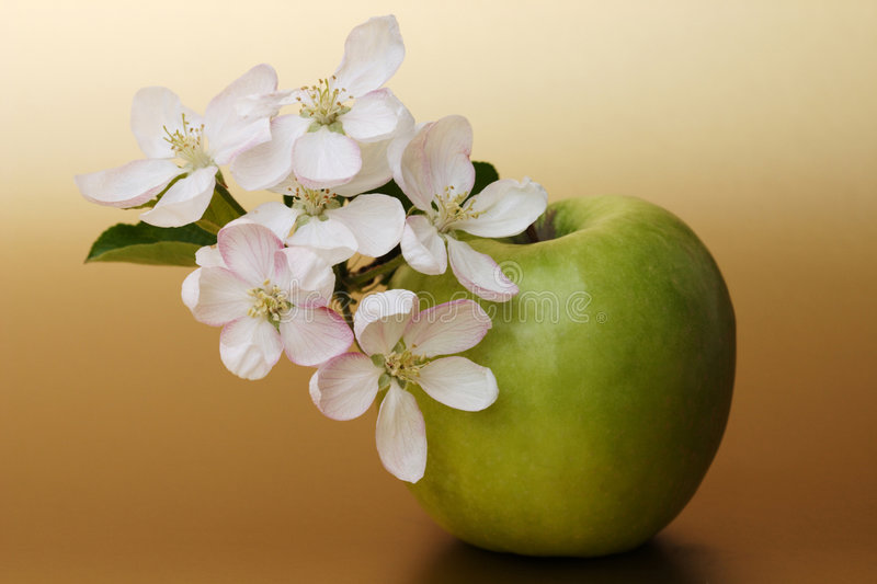 Download Apple blossoms stock image. Image of nature, symbol, freshness - 4225305