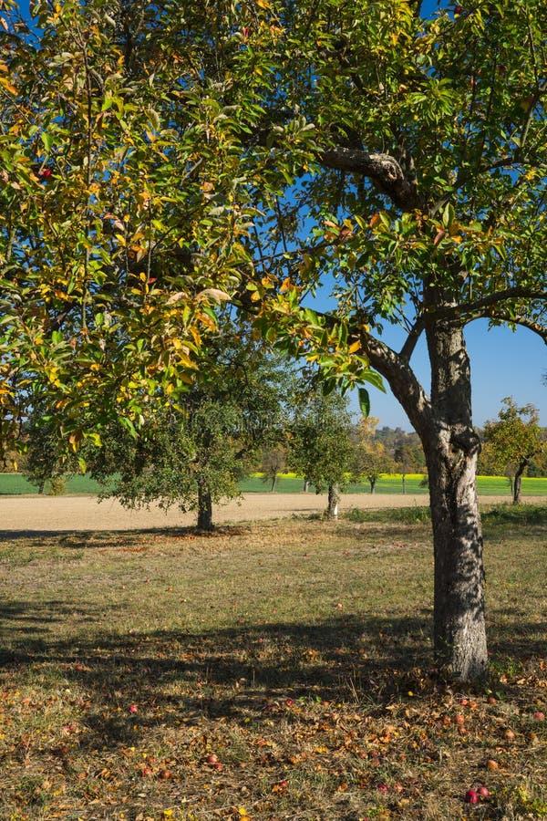 Apple-boom in landschap dichtbij Wiesloch, Duitsland langs route geroepen Fachwerkstrasse royalty-vrije stock foto's