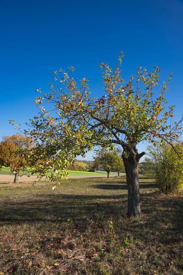 Apple-boom in landschap dichtbij Wiesloch, Duitsland Op route geroepen Fachwerkstrasse stock afbeeldingen