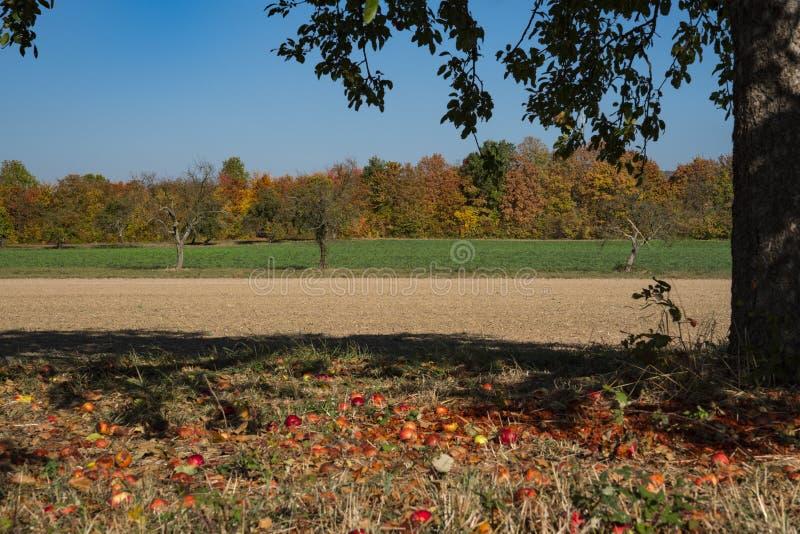 Apple-boom in landschap op route geroepen Fachwerkstrasse, Duitsland royalty-vrije stock foto's