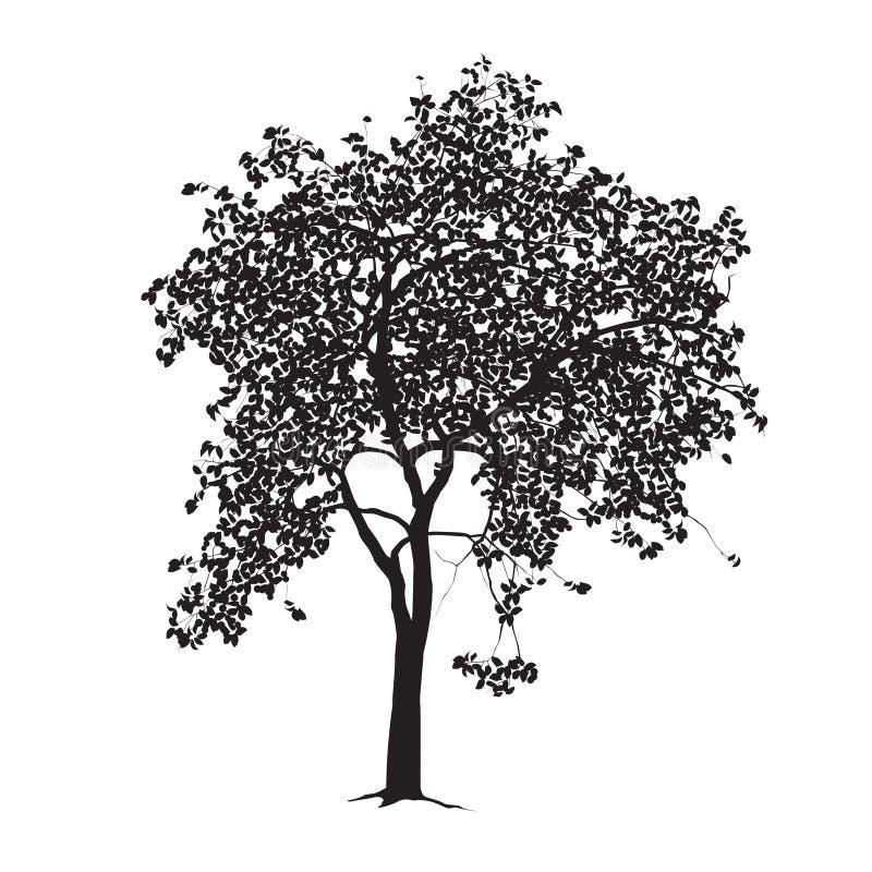 Apple-boom silhouet op een witte achtergrond stock foto