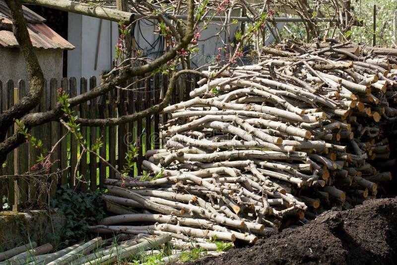Apple-boomboomstammen stock afbeelding