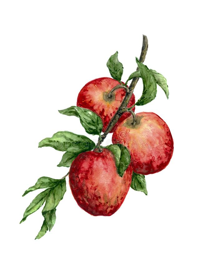 Apple branch watercolor painting on white background. Great for farming, gardening, grocery, juice labels. Can be used separately for decorative purposes royalty free stock photography