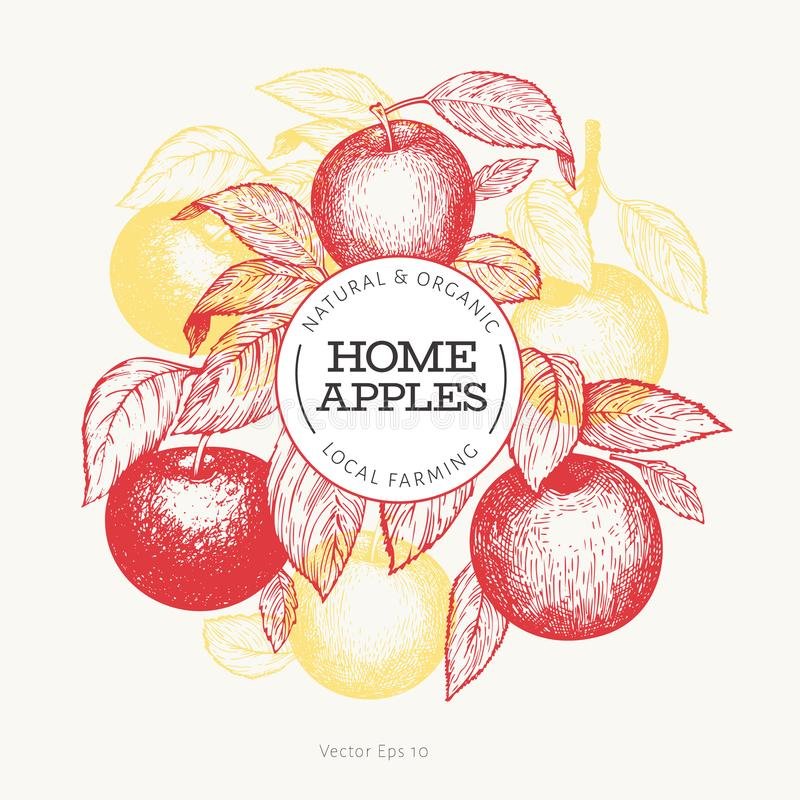 Apple branche design template. Hand drawn vector garden fruit illustration. Engraved style fruit frame. Retro botanical banner royalty free illustration