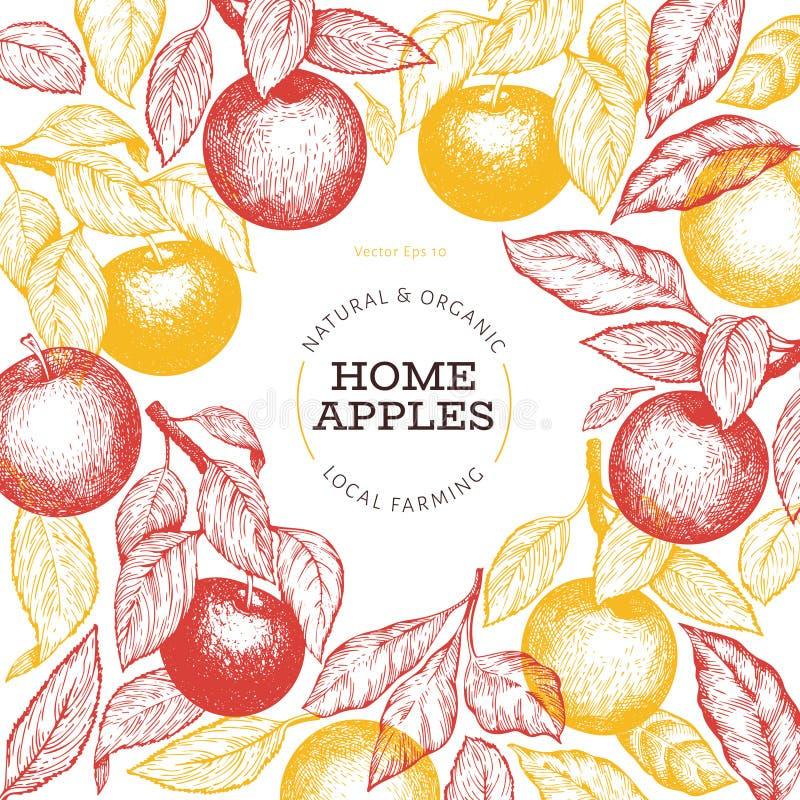 Apple branche design template. Hand drawn vector garden fruit illustration. Engraved style fruit frame. Retro botanical banner stock illustration