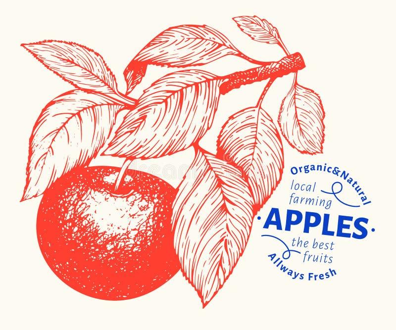 Apple branche illustration. Hand drawn vector garden fruit illustration. Engraved style fruit. Retro botanical illustration vector illustration