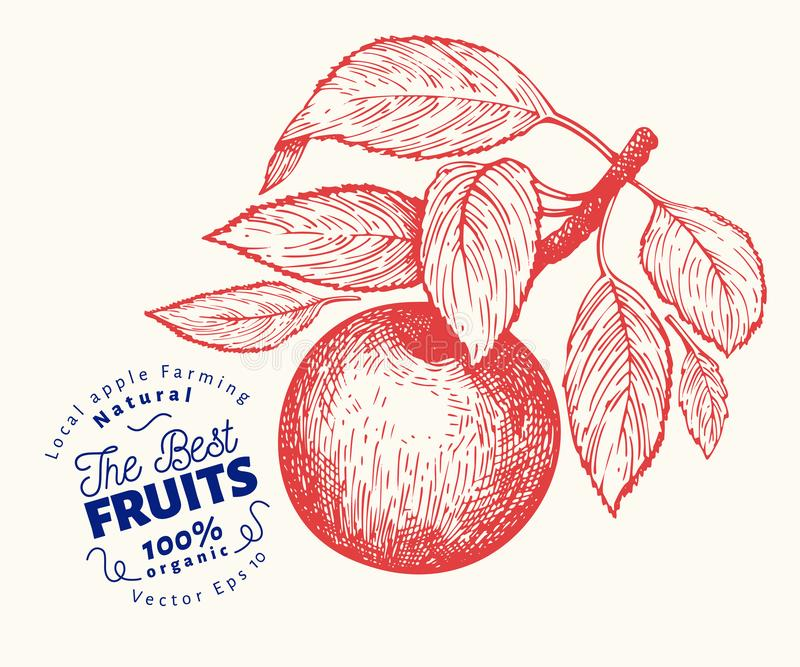 Apple branche illustration. Hand drawn vector garden fruit illustration. Engraved style fruit. Retro botanical illustration stock illustration