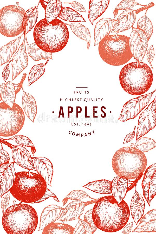 Apple branches design template. Hand drawn vector garden fruit illustration. Engraved style fruit frame. Vintage botanical banner royalty free illustration