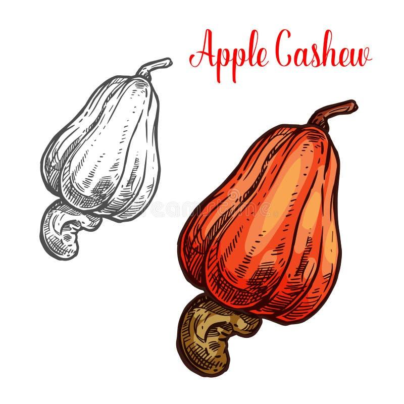 Apple-cachoufruit met rijpe nootschets royalty-vrije illustratie