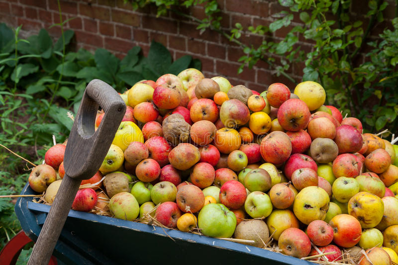 Apple Cart. Full of different sizes and varieties of apple royalty free stock photo