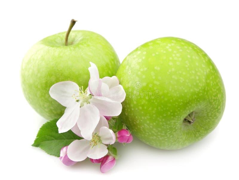 Apple com flor foto de stock