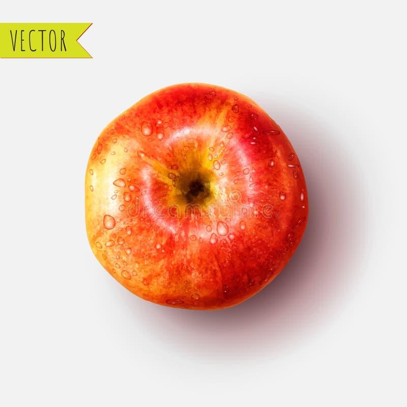 Apple com gotas da água, ilustração do vetor ilustração stock