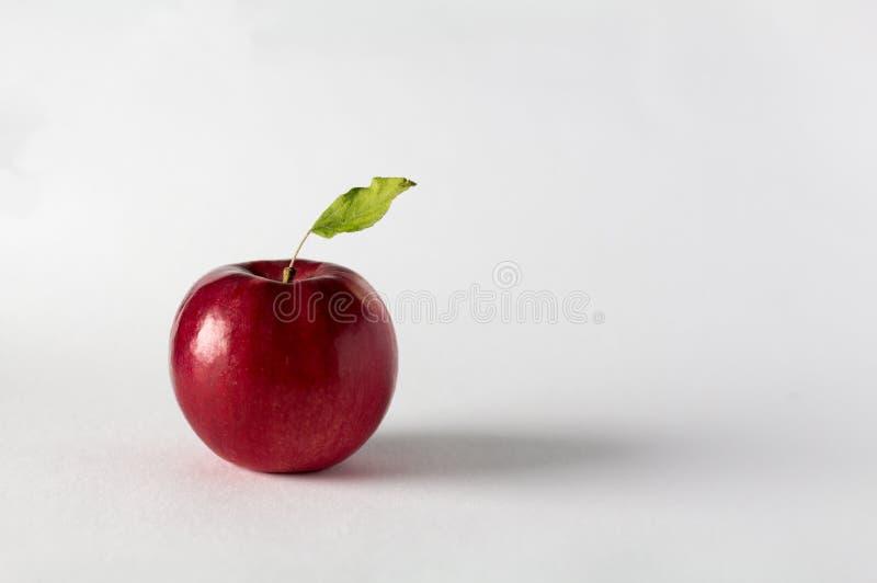 Apple com licença verde foto de stock royalty free