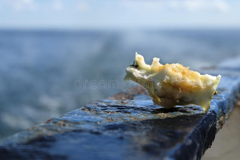 Apple core outdoor. Apple core lying in the peeling blue metal fence in a sunny summer light stock photography