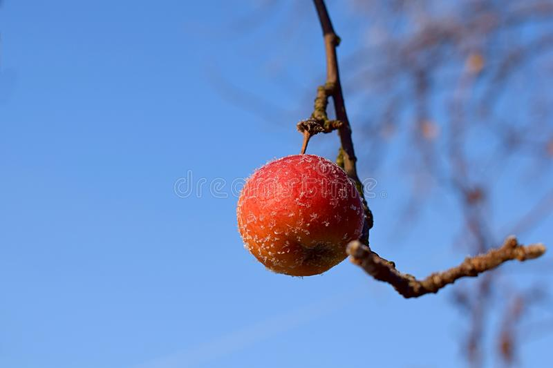 An apple covered with frost against the sky stock image