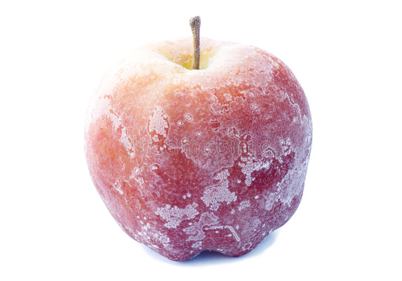 Apple covered with frost royalty free stock photo