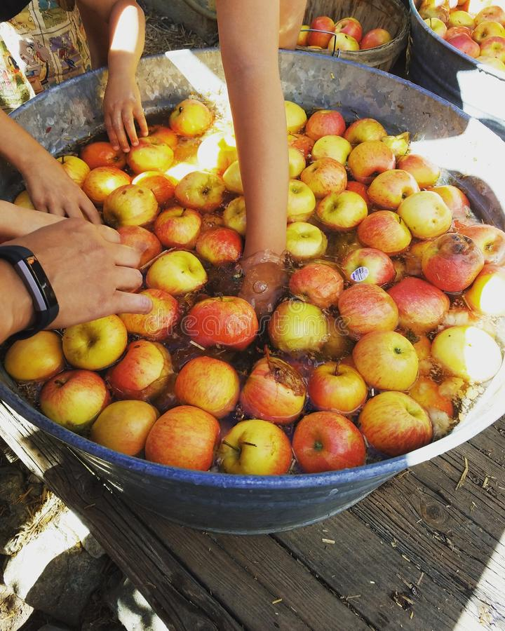 Apple cultivent image stock
