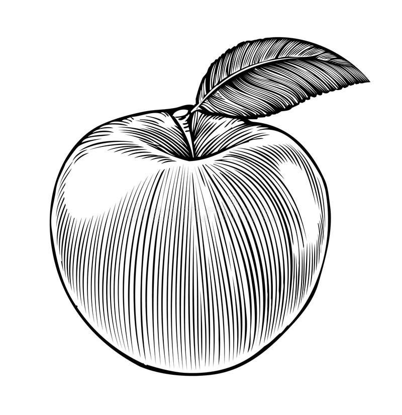 Apple dans le type de gravure illustration libre de droits