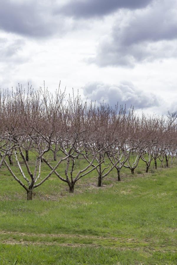 Download Apple-de Boomgaardlente stock afbeelding. Afbeelding bestaande uit niemand - 54091931