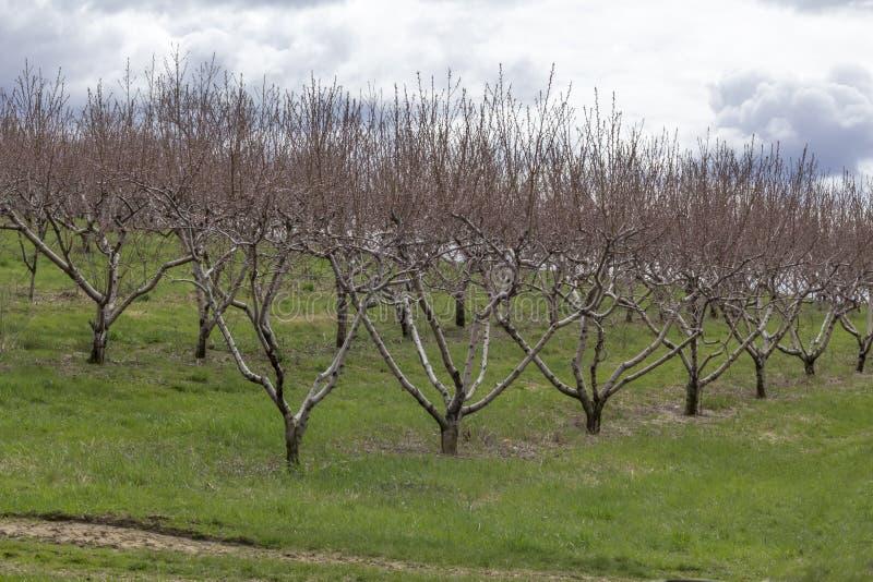 Download Apple-de Boomgaardlente stock afbeelding. Afbeelding bestaande uit groei - 54092143