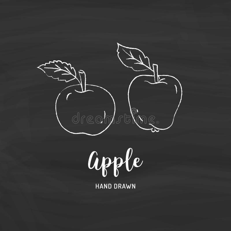 Apple die Vectorhand getrokken appelen trekken Schets van appelen met krijt op een bord, Vector geïsoleerde pictogrammen stock illustratie