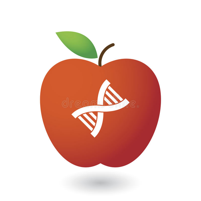 Apple and DNA stock image