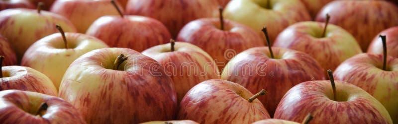 Download Apple Donnent à La Bannière Une Consistance Rugueuse Horizontale Photo stock - Image du nature, mûr: 77151098