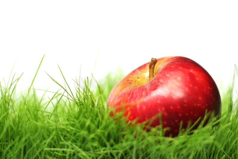 Apple en la hierba imagen de archivo libre de regalías