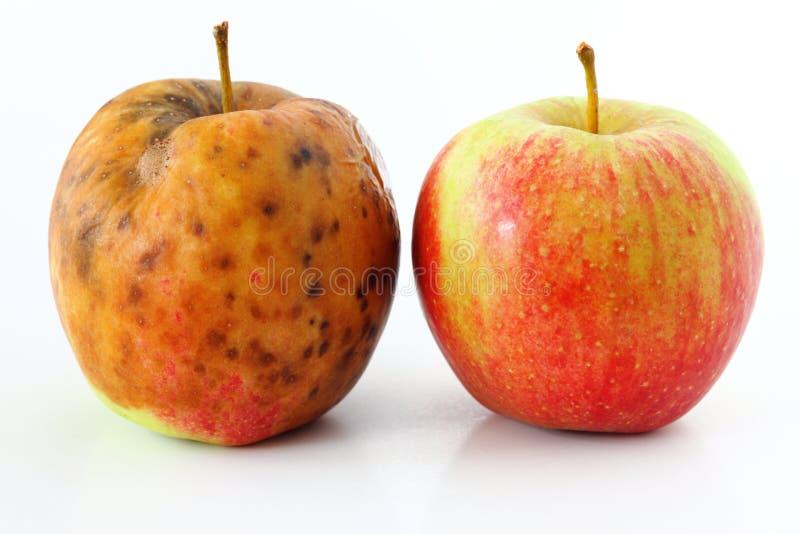 Apple estropeó en las manzanas sanas y putrefactas blancas foto de archivo