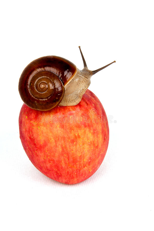 Apple et escargot photo libre de droits