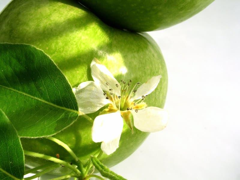 Apple et fleur photo libre de droits