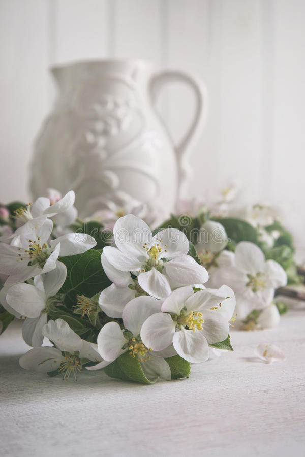 Apple florece las flores con el jarro en fondo imágenes de archivo libres de regalías