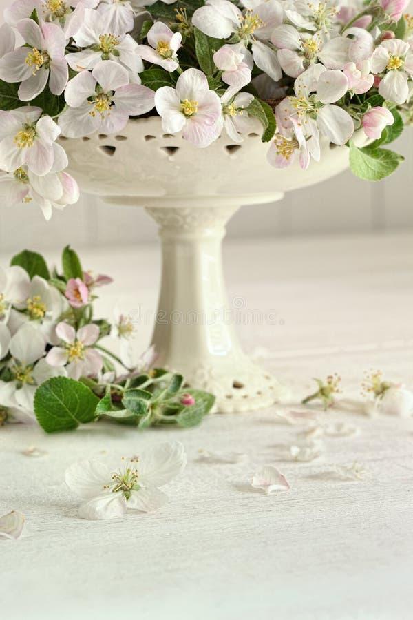 Apple florece las flores en florero imagen de archivo libre de regalías