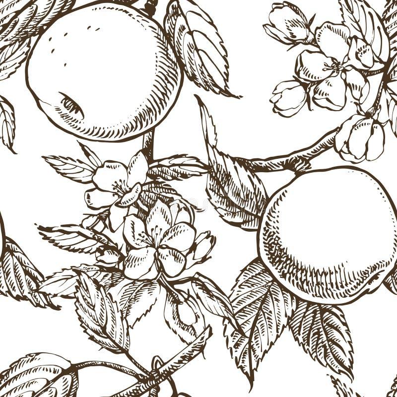 Apple floresce ramo isolado no branco Ilustração tirada do vintage mão botânica Flores da mola da árvore de maçã ilustração do vetor